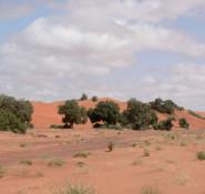 desert-heat