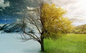 summer-winter-concept